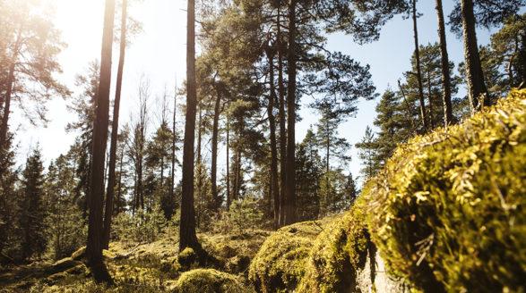 Kallioita, puita, auringon kimallus puiden välistä
