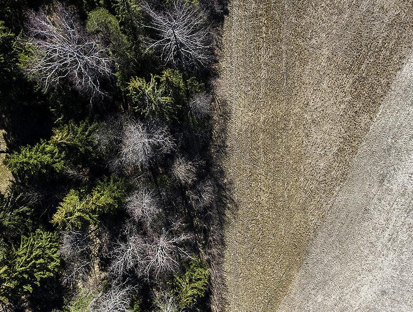 ilmakuva metsästä ja kaislikosta